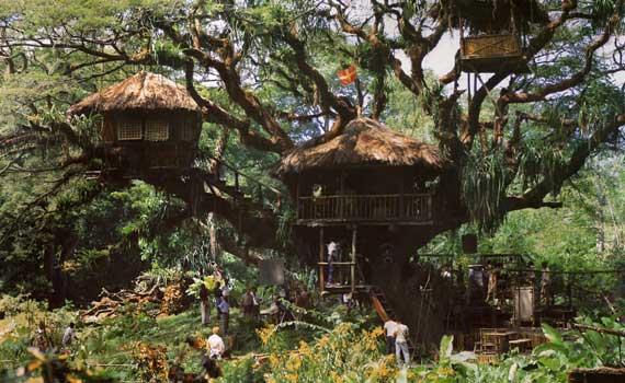 cabane-arbre-samanea-albizia-saman